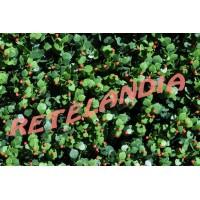 REDPOINT PIRACANTA 50X50